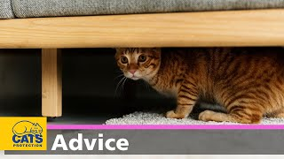 Shy cats | How to help a scared cat
