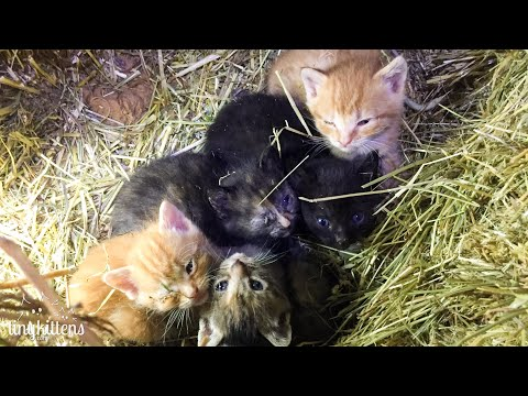 LIVE: Piggy And Peggy On Poo Watch!  TinyKittens.com