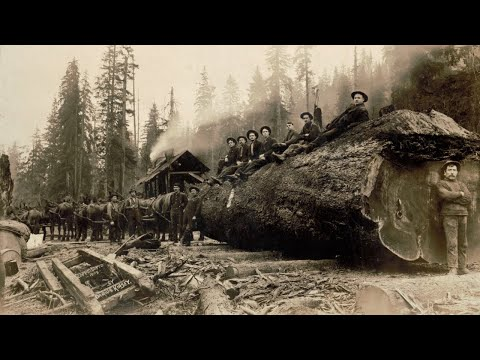 The History Of FILSON
