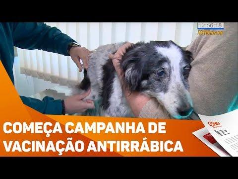 Começa campanha de vacinação antirrábica - TV SOROCABA/SBT