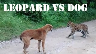 Leopard vs Dog ¦ Leopard Vs Dog Real Fight ¦ Dog Attacks Leopard ¦ Leopard Attacks Dog