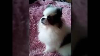 Клип/ Юлиана Караулова море/ YouTobe Pets