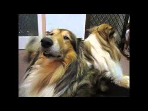 Dog and chicken having unwanted sex from YouTube · Duration:  1 minutes 38 seconds