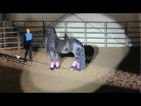 Video of BlackPearl Equestrienne at Linn County Fairgrounds Albany Oregon