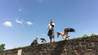 La Volerie des Aigles, Alsace
