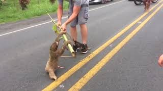 Sloth thanks for rescue