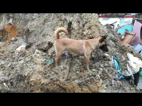 Dogs Help Search for Survivors After Deadly Mudslides in Manizales