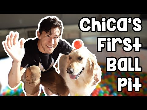 Thumbnail: Chica's First Ball Pit