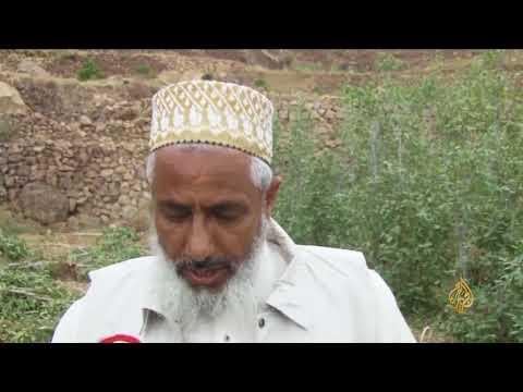 هذا الصباح-مبادرة يمنية لزراعة البن بدل القات  - نشر قبل 59 دقيقة