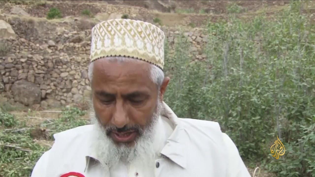 الجزيرة:هذا الصباح-مبادرة يمنية لزراعة البن بدل القات