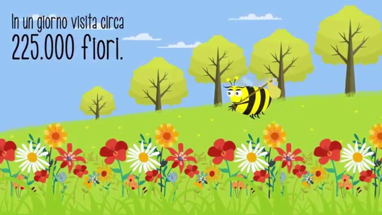 Il mondo delle api cartone animato educativo youtube