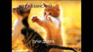 сибирский кот казань купить 2