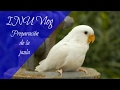 INU Vlog 21 - Preparando la jaula (Agapornis roseicollis)