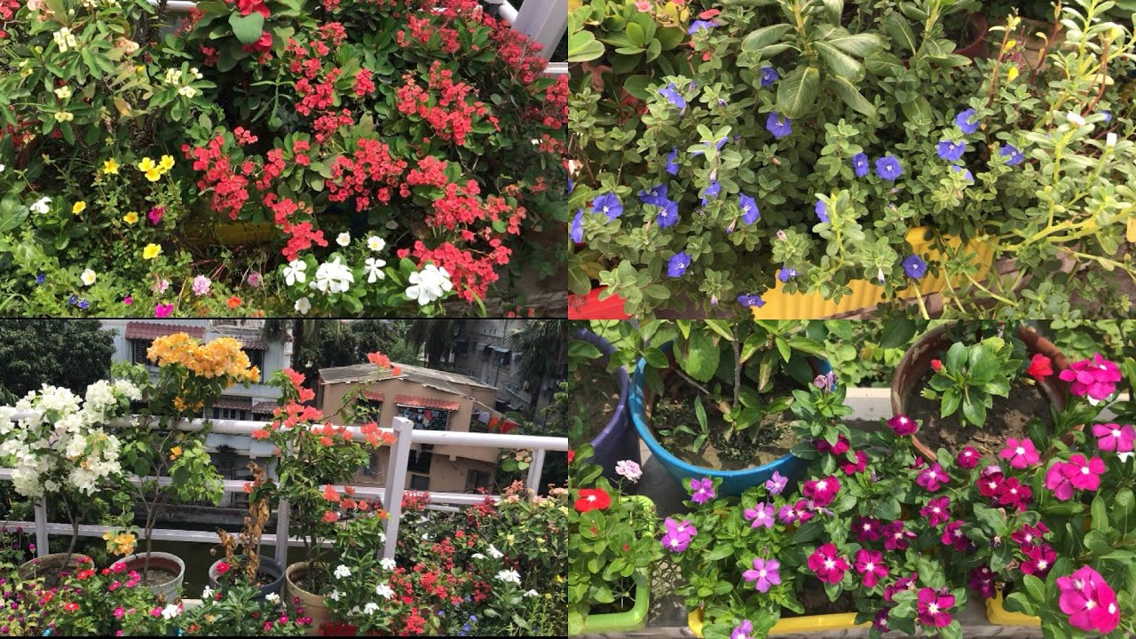 Beautiful Plants on My Terrace Garden with Names - YouTube