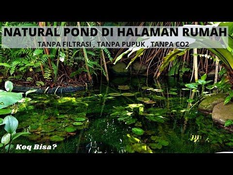 kolam-mirip-sungai-asli-di-depan-rumah,-tanpa-filtrasi,tanpa-pupuk,-tanpa-co2-,-kolam-ter-gila-!!!