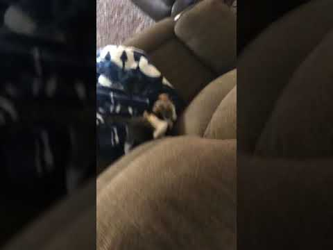 My two little cats fighting part two