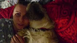 Новая жизнь собаки из приюта! Когда тебя ОЧЕНЬ ЛЮБЯТ