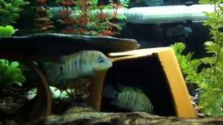 38 & 35 Gallon  Aquariums (double Stand)
