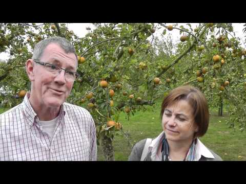 Community Supported Agriculture (CSA) - Dragon Orchard, Herefordshire