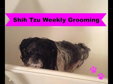 Shih Tzu Grooming Series 2/3: Weekly