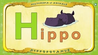 Multipedia of Animals - Letter H -  Hippo