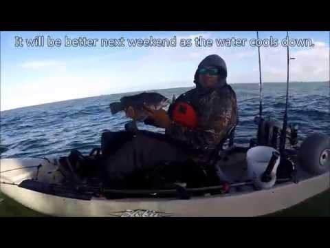 Tautog fishing chesapeake bay bridge tunnel nov 21 for Chesapeake bay bridge fishing report