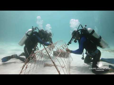 Supporting Reef Conservation by Promoting Coral Garden Tourism