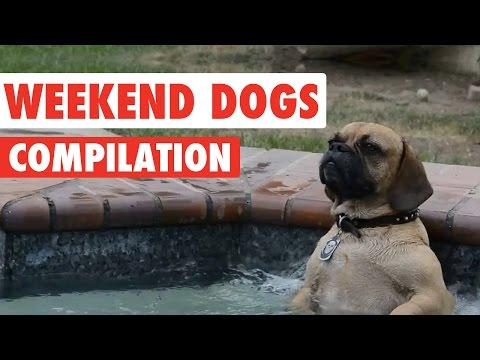 Weekend Dogs Video Compilation 2016