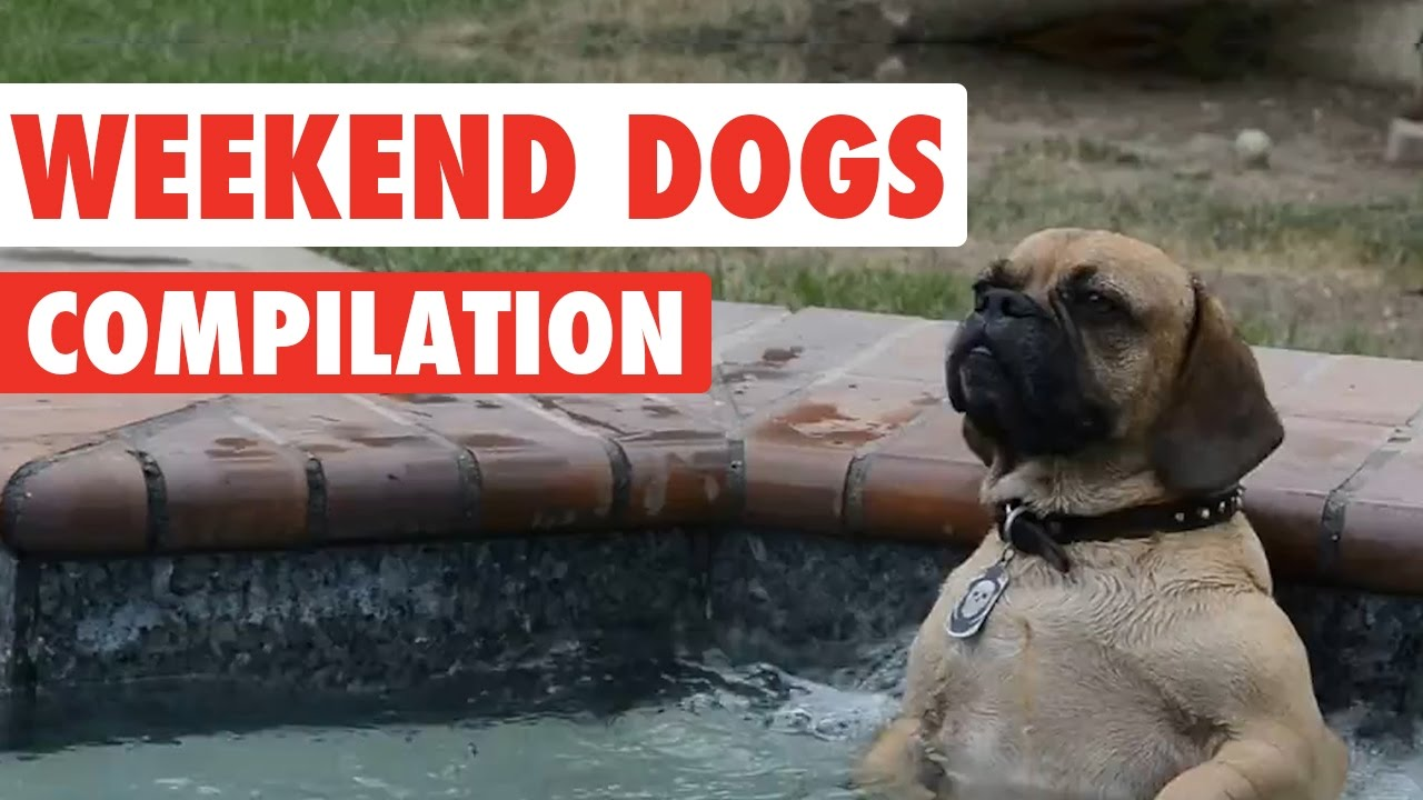 Weekend Dogs Video Compilation 2016 - YouTube