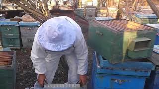 Двухматочное содержание пчел в многокорпусных ульях (схематично) - уроки пчеловодства
