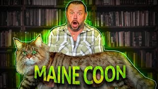 MAINE COON, O GATO GIGANTE AMERICANO! | RICHARD RASMUSSEN
