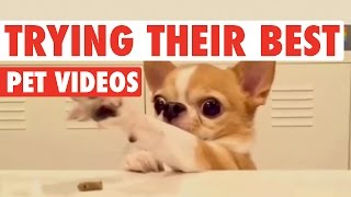 Pets Trying Their Best || Funny Pet Compilation