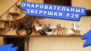 Милая подборка домашних животных 29 Cute videos with pets