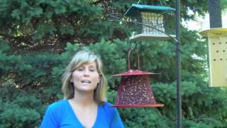 No-no Red Collapsible Cardinal Feeder - For The Wild Birds