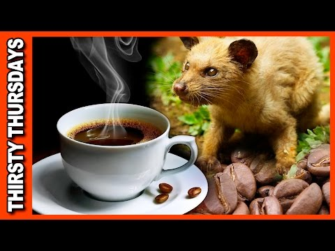 World's Most Expensive Coffee • Kopi Luwak Review