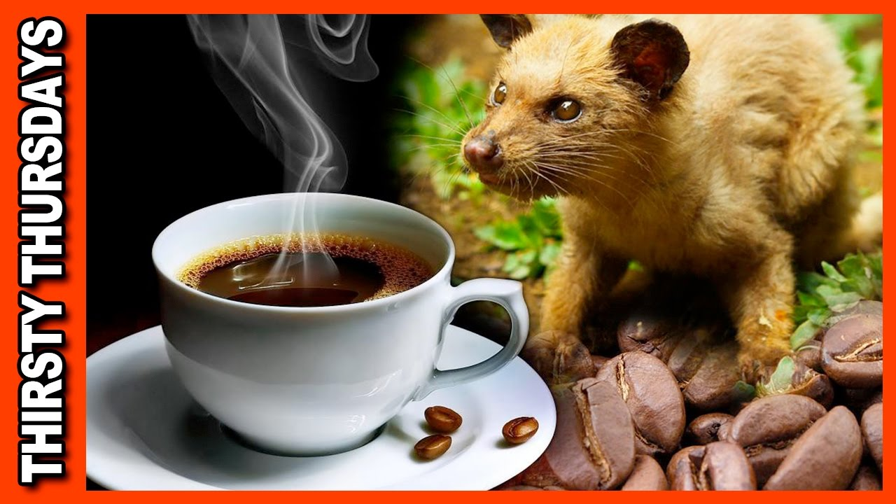 World's Most Expensive Coffee €� Kopi Luwak Review Youtube