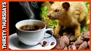 World's Most Expensive Coffee • Kopi Luwak Review   KBDProductionsTV