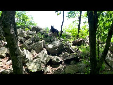 Ep33 A nice breeze! Hiking with German Shepherd Series Part 2 of 4 Hiking with Dog