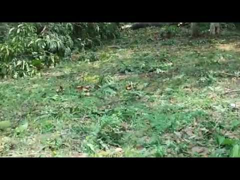 The natures cures due to heavy storm destroy and garden  worried forest department