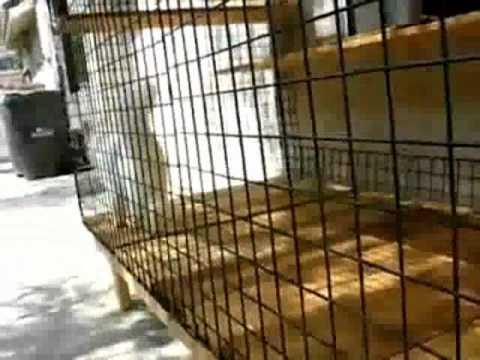 The Cat Enclosure . Com-Modular Cat Run Enclosure Tour