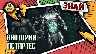 Вся правда об анатомии Астартес!   Знай   Warhammer 40000