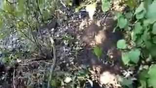 Уничтоженная колонна российских террористов у посёлка Лисичье