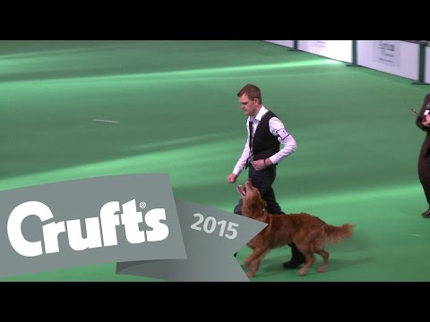 Dog Obedience Championships - Part 9 | Crufts 2015