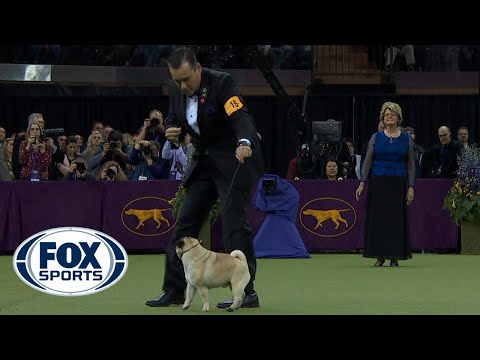 Best in Show Ceremony | WESTMINSTER DOG SHOW (2018) | FOX SP