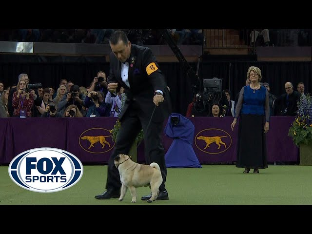 Best in Show Ceremony | WESTMINSTER DOG SHOW (2018) | FOX SPORTS