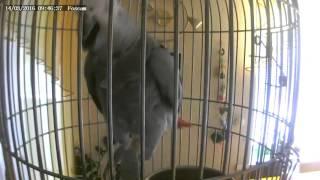 Попугай Жако беседует