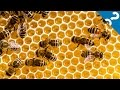 5 of the Weirdest Things About Bees | What the Stuff?!