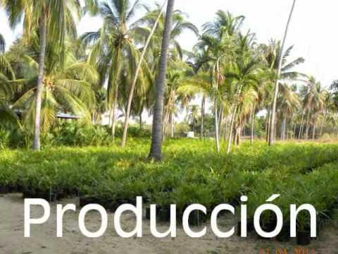 Conoce viveros yadira youtube for Viveros de plantas de ornato