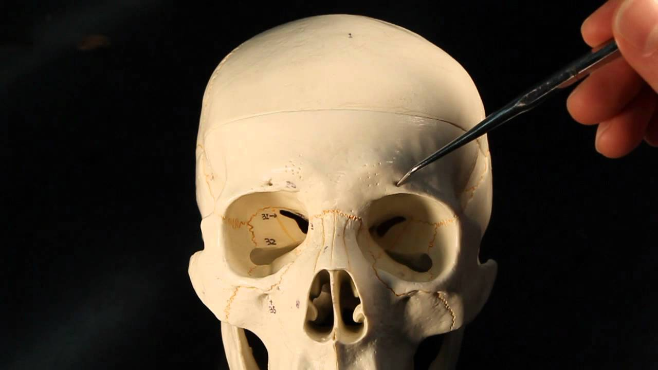 Frontal Bone Youtube