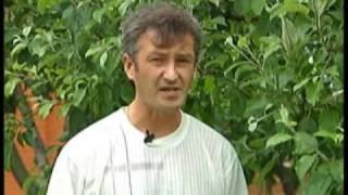 видео Вредители яблонь и борьба с ними: фото, чем обрабатывать яблони от садовых вредителей